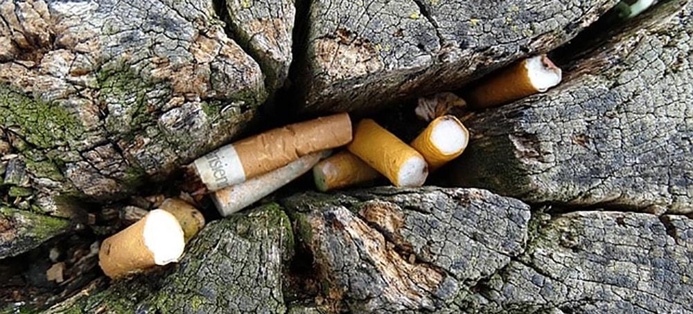 cigarette et environnement